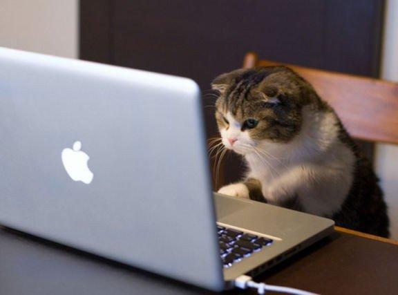 cat-pc-576x427