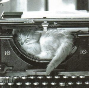 cat in typewriter