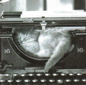 cat in typewriter