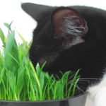 A Basic List of Medicinal Herbs and Remedies *Medicine Cat Guide* by Shimmerfeather