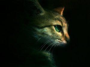 Warriors-cats-hd-wallpaper-download-warriors-cats-images-free