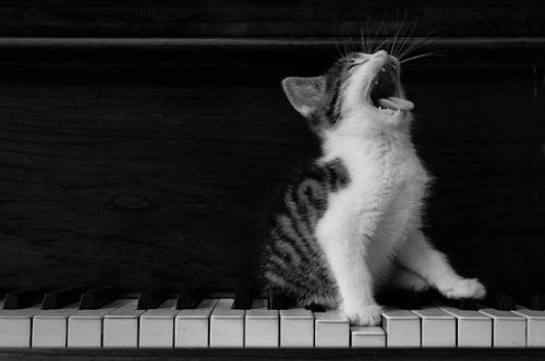 catsinging