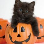 A SPOOKY Month's Round Up In Cats: It's Gonna Be a Cat-astrophe