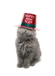 A Month's Round-Up In Cats: Happy Mew Year!