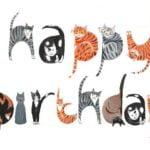 Happy Birthday, Witchpaw!