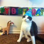 Happy Birthday, Moonpaw!