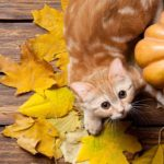 A Month's Round Up In Cats: You'd Better Prepurr Yourself