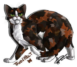 Should Tawnypelt have joined Shadowclan? by Silverpaw