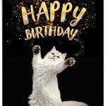 Happy Birthday, Sweetpaw!