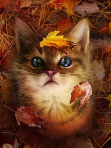 A Month's Round-Up in Cats: Paw-some Autumn!