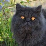 Top ten favourite cats by Moonmist