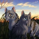 Why Dovewing Shouldn't mate Bumblestripe by Night-tail