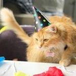 Happy Birthday, Aspenshade!