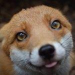 Happy Clanniversary, Foxtail!